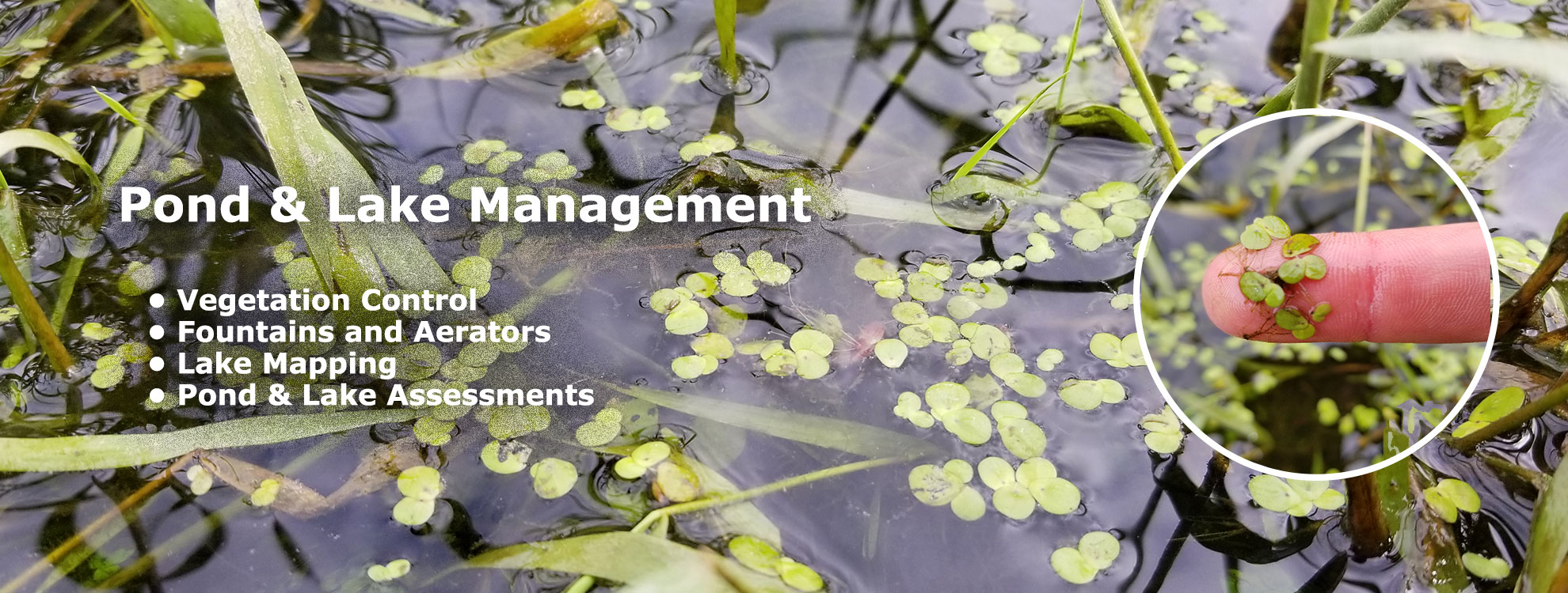 Pond and Lake Management in Greensboro, Winston-Salem, High Point and Burlington